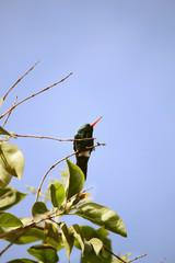 colibrí descansando sobre la rama