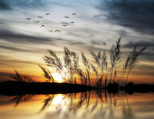 amanecer tras la vejetacion del lago © kesipun