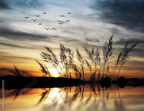 amanecer tras la vejetacion del lago