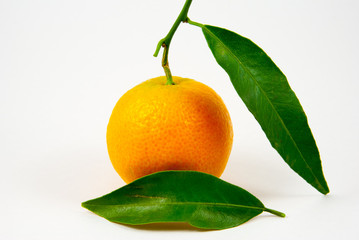Orange mandarin / clementine / tangerine with green leaf