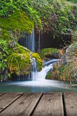 fuentes natural en el bosque