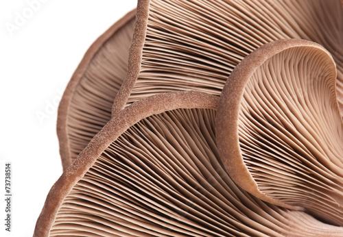 Oyster mushrooms - 73738514