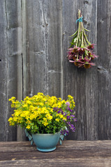 medical flowers - st.Johns wort and echinacea herbs  on  wall