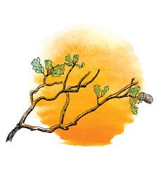 Branch of  oak tree against the sun