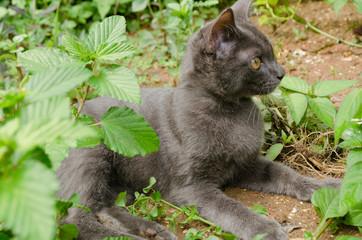 black cat thailand