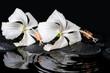 Beautiful spa concept of two delicate white hibiscus, zen stones - 73741104