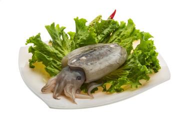 Raw cuttlefish