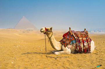 The desert transport
