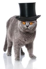 Katze mit Zylinderhut