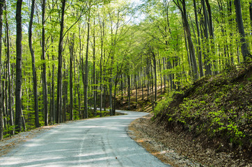 Wavy road in forest