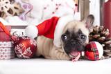 puppy christmas French Bulldog