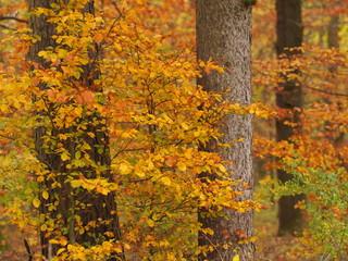 Herbstliche Waldstimmung