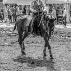Cavallo con cavaliere - Esibizione