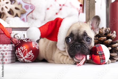 Staande foto Franse bulldog puppy christmas French Bulldog