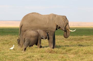 Elefantemutter mit Kind