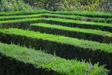Labyrinth Maze of Tall Bushes.