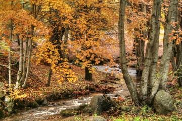 fiume montano in autunno