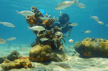 Underwater scene with snorkeler looking sea life
