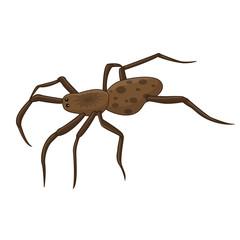 spider isolated illustration