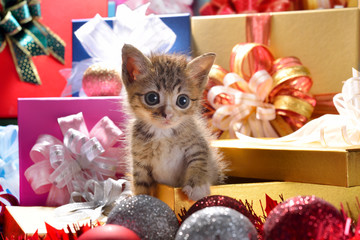 Funny kitten coming out of a gift box as a present