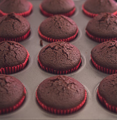Just baked fresh chocolate cupcakes in oven tray