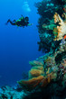 Diver swimming around in Banda, Indonesia underwater