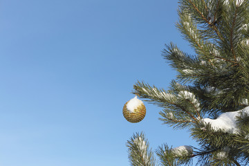The sphere hanging on a branch