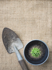 Gardening tools with cactus on nature background