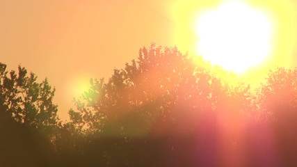 Orange Sun  and trees. PAL Time lapse
