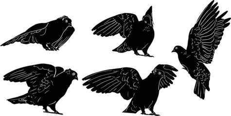 five black sketches of pigeons