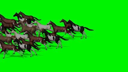 many horses running past - green screen