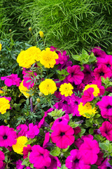 Purple and Yellow Flowers in Green Garden
