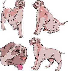 Mastiff dogs