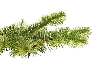 Fir-tree twigs