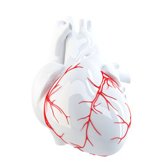 Human Heart. Isolated. Contains clipping path