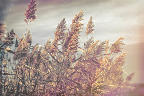 piekna-przyroda-trzcina-trzcina