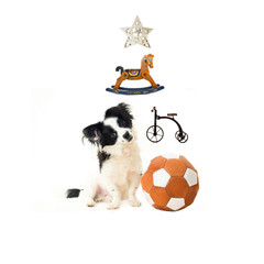 Adopt a puppy for Christmas