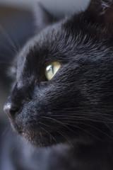 Close-up Katze