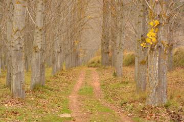 camino bajo las ramas de los arboles