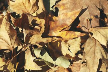 Autumn foliage as background