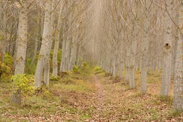 sendero bajo los arboles en otoño
