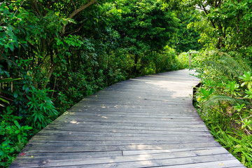 Walkway in forest