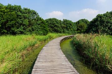 Walking path in wetland