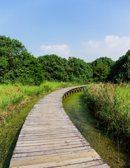 Boardwalk through wetland