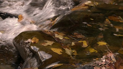 river in autumn, carrying its waters fallen leaves from trees