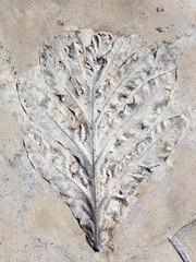 imprint leaf plants
