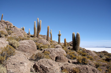 Inca Island with Cactuses in Uyuni salt desert, Bolivia