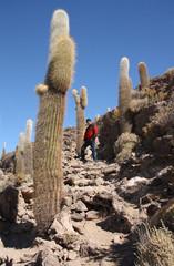 Tourist man at Island with Cactuses in Uyuni, Bolivia