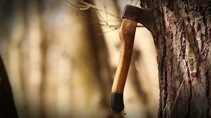 Axe unexpectedly gets into tree trunk carving a lot of chips