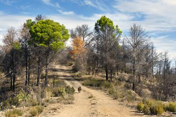 Camino en los Cerros del Rincón. Guadalajara.